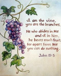 VIne and Branches
